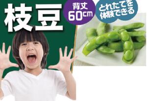 プランターで枝豆>